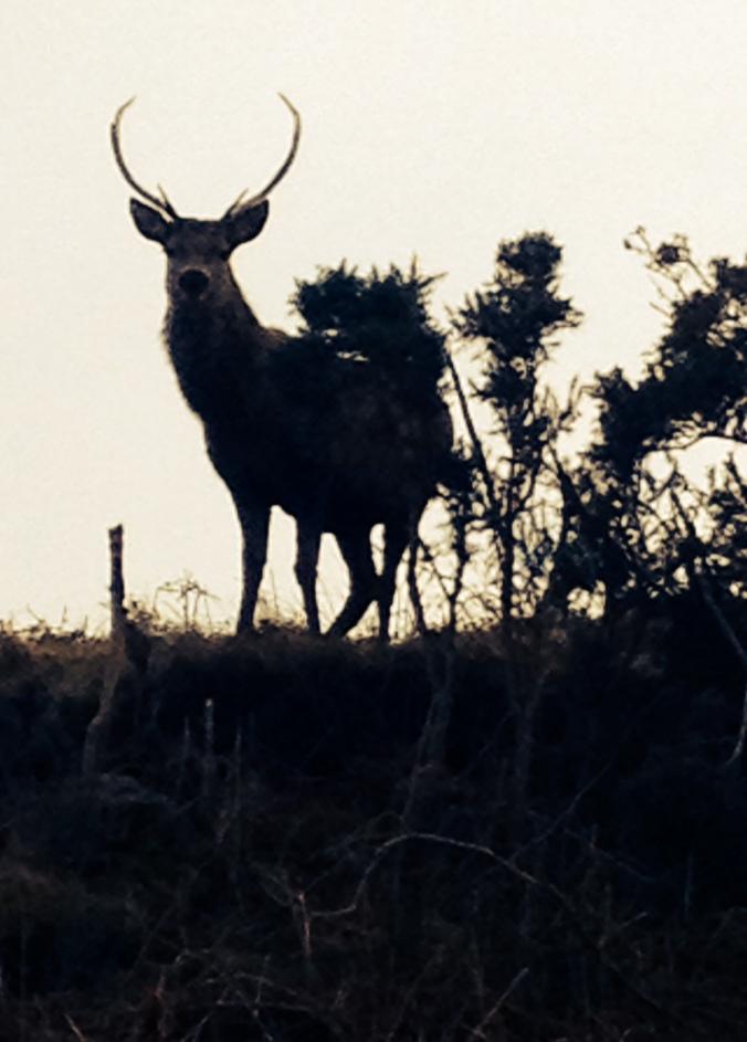 Vigilant on the hill