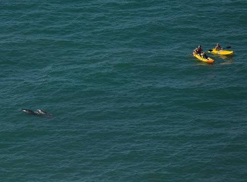 Wild west Wales dolphins of Cardigan Bay