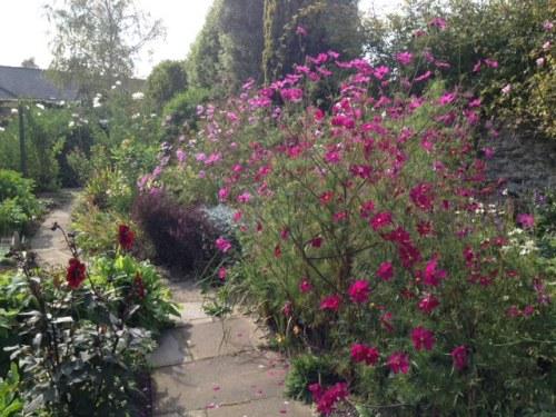 Fearless fuchsia pinks