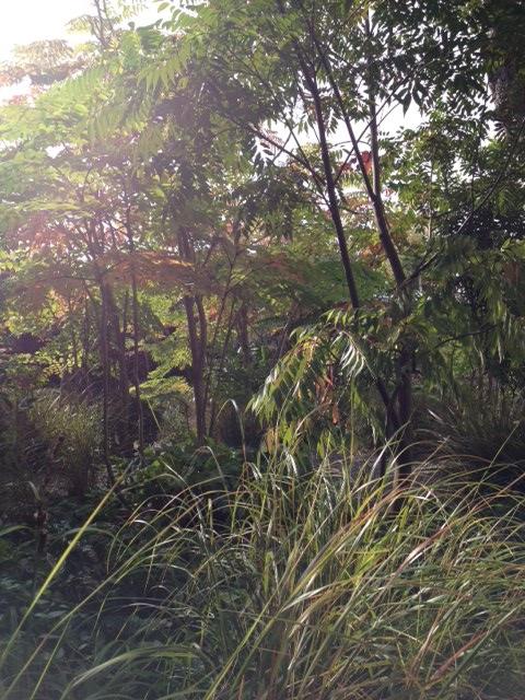 Jungle sensations
