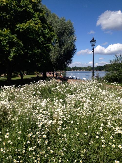 Hyde Park wildflowers