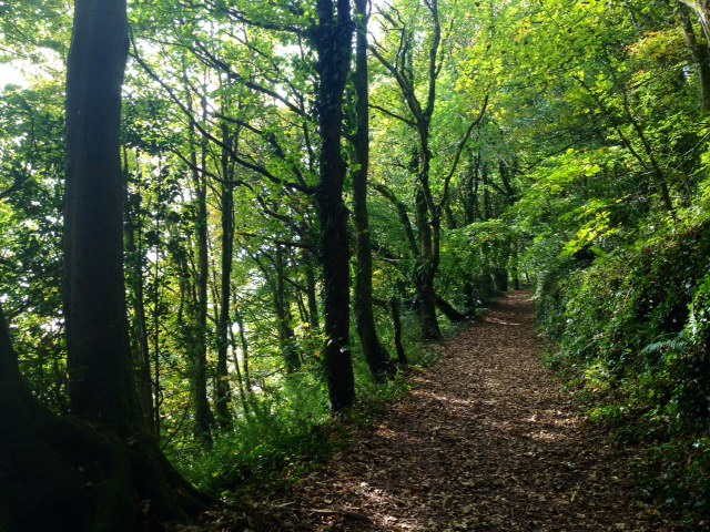 How may times must Dylan Thomas have strolled this woodland path?